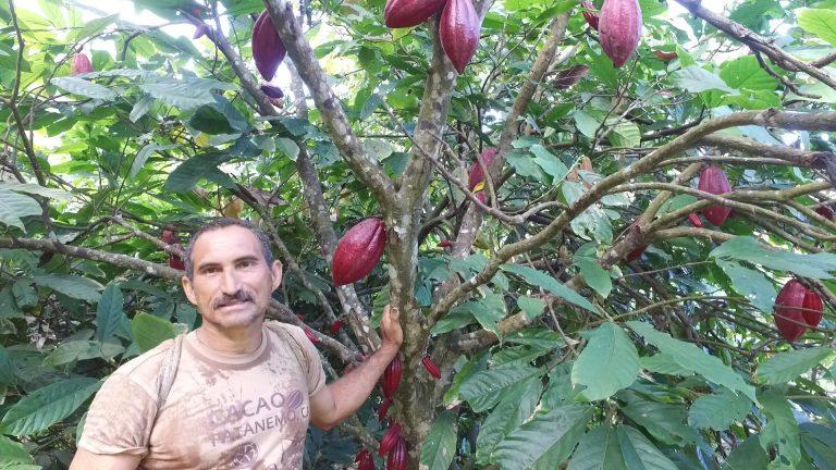 juan-cacao